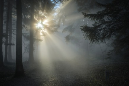winter-sun-1547273_1920